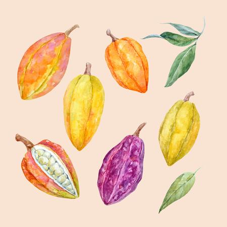 아름 다운 벡터 수채화 손으로 그려진 된 카 카오 열매를 사용 하여 설정