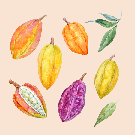 Beautiful vector set with watercolor hand drawn cacao fruits