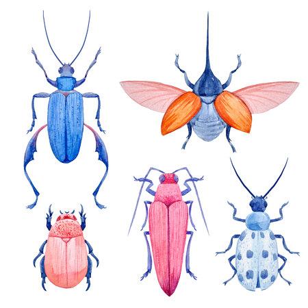 Watercolor beetle set