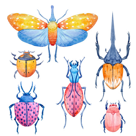 Watercolor beetle set