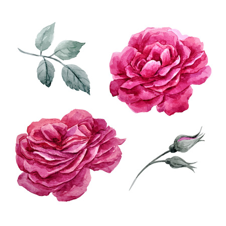 popular: Watercolor roses vector set