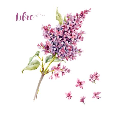 Acuarela vector lila flor