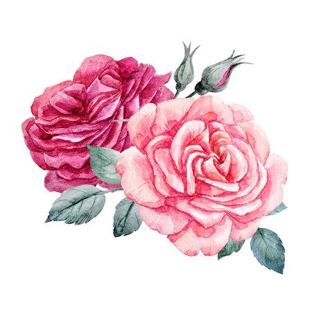 Watercolor roses composition Stock fotó
