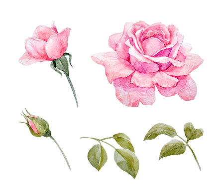 Watercolor roses set Stock Photo