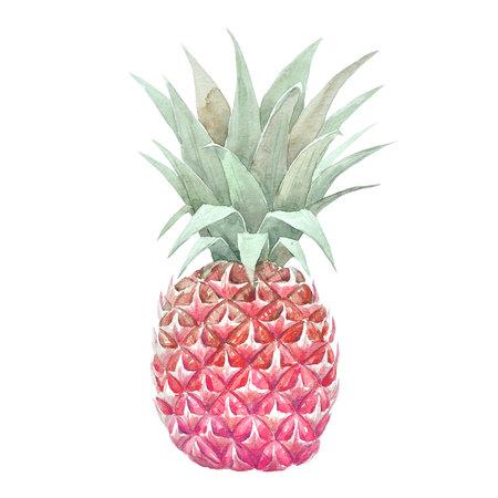수채화 파인애플 과일