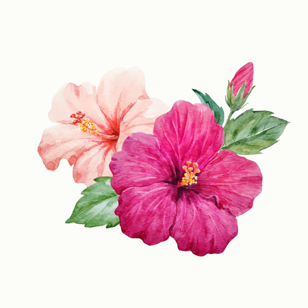 Watercolor vector tropical hibiscus flower Reklamní fotografie - 82929307