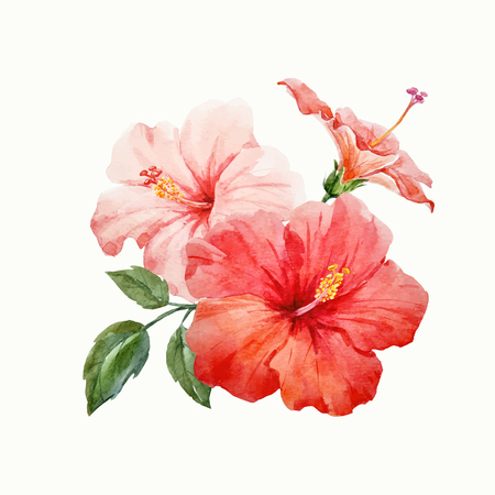 水彩ベクトル熱帯のハイビスカスの花