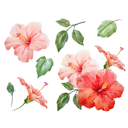Watercolor vector tropical hibiscus flower