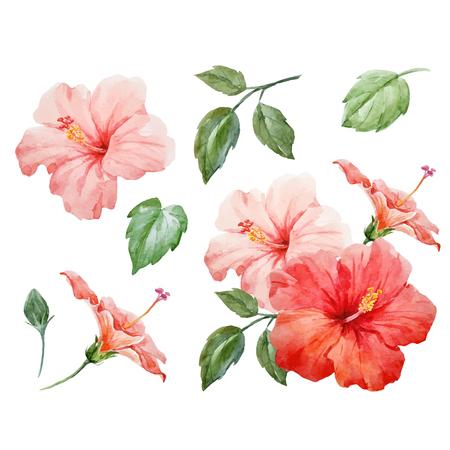Waterverf vector tropische hibiscus bloem