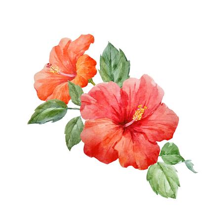 Acquerello vettore fiore tropicale ibisco Archivio Fotografico - 82929308