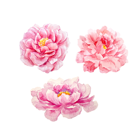 Watercolor peony vector set