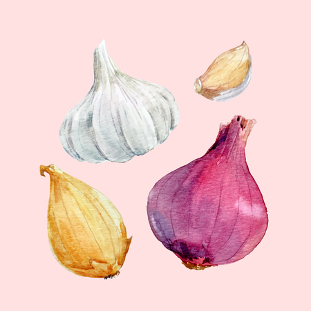 Watercolor onion vector set Illustration