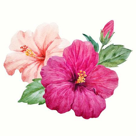 Watercolor tropical hibiscus flower Zdjęcie Seryjne
