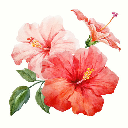 Watercolor tropical hibiscus flower 스톡 콘텐츠