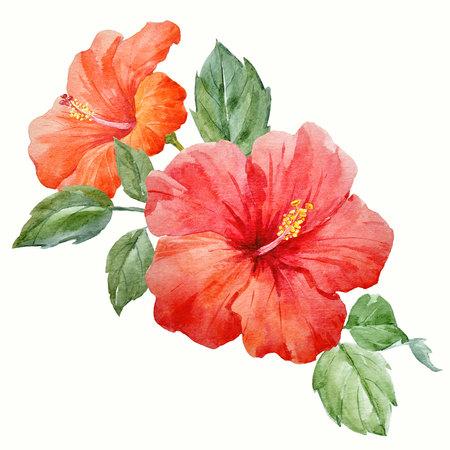 水彩トロピカル ハイビスカスの花
