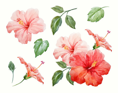 Watercolor tropical hibiscus flower Banco de Imagens