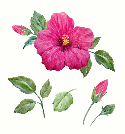 Watercolor tropical hibiscus flower Stock Photo