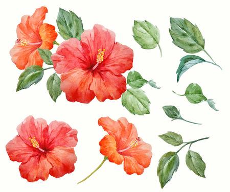 Fiore tropicale di ibisco di acquerello Archivio Fotografico - 83655537