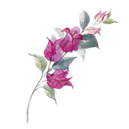 水彩花の枝