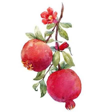 Pomegranate fruit branch Stok Fotoğraf - 85143020
