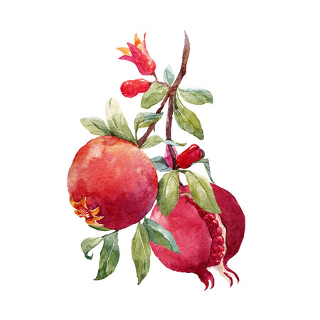 Pomegranate fruit branch