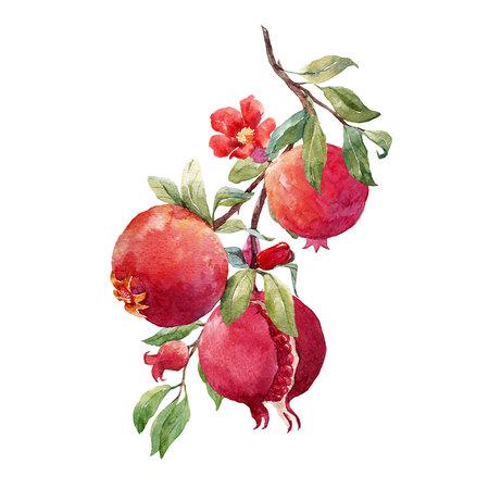 석류 과일 가지