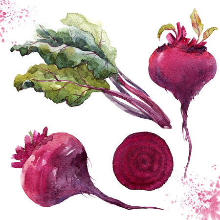 Watercolor beet set
