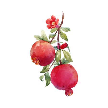 ザクロ果実ベクトル枝