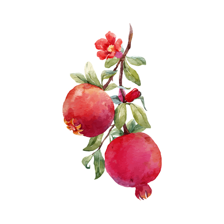 Pomegranate fruit vector branch