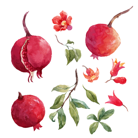 Beautiful vector set with nice hand drawn watercolor pomegranate fruit on transparent background Illustration