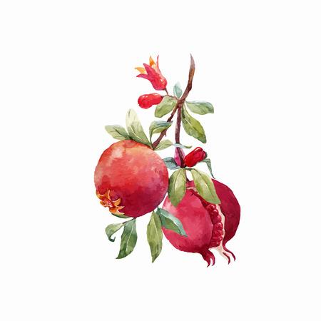 석류 열매 벡터 분기 스톡 콘텐츠 - 86100777