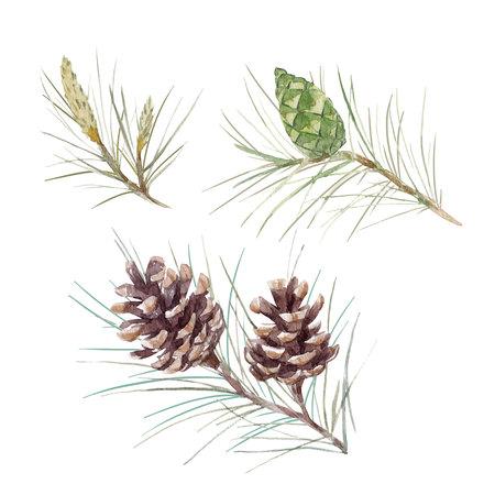Watercolor fir cone set Imagens - 86370552