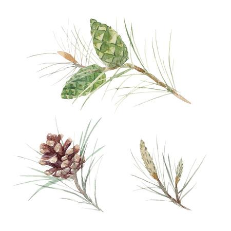 Watercolor fir cone set Imagens