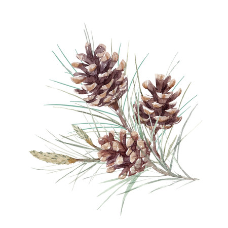 Watercolor fir cone set Banco de Imagens