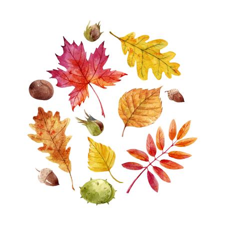 Watercolor fall leaves vector set Фото со стока - 87128154