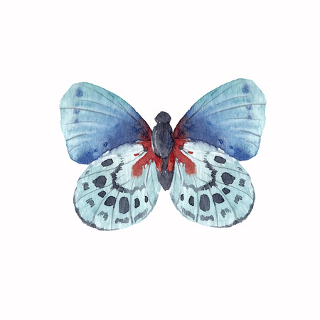 Beautiful vector illustration with hand drawn watercolor butterflies