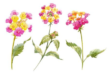 lantana: Watercolor Lantana flower set