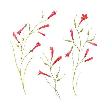 水彩 Russelia 花セット 写真素材