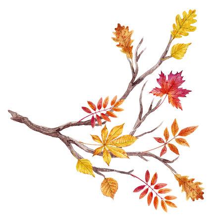 Watercolor fall tree branch Stock fotó