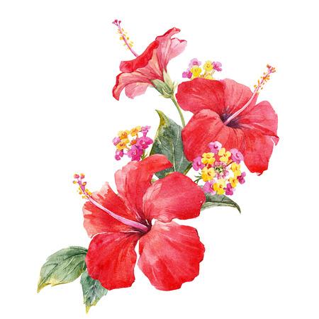 Watercolor hibiscus composition Zdjęcie Seryjne - 88478735