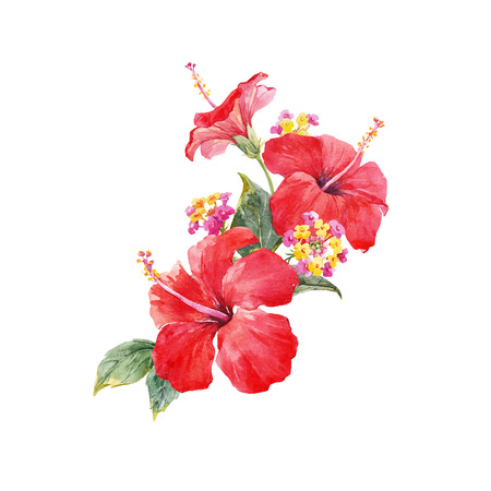Watercolor hibiscus composition Illustration