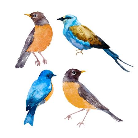 Watercolor bird vector set Illustration