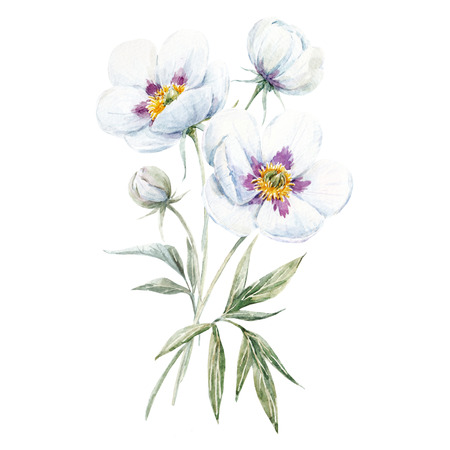 Watercolor floral bouquet