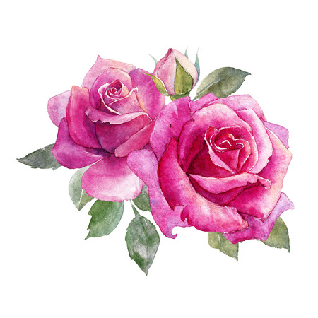 Watercolor roses composition 스톡 콘텐츠