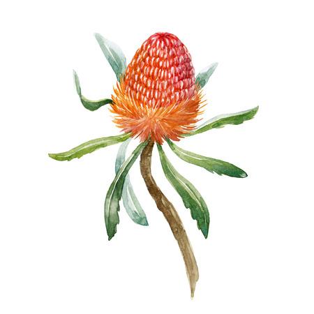 水彩バンクシアの花