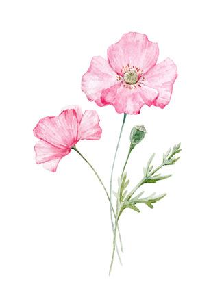 수채화 양귀비 꽃 스톡 콘텐츠