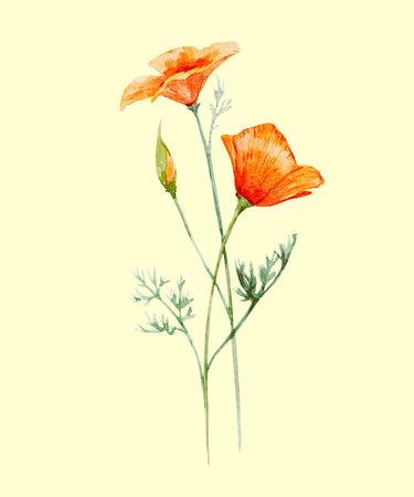 Beautiful illustration with hand drawn watercolor poppy flower