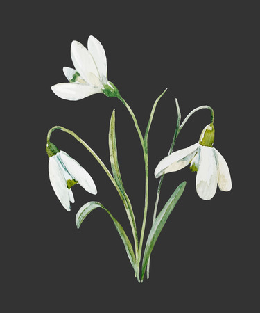 Watercolor snowdrop flower Stok Fotoğraf