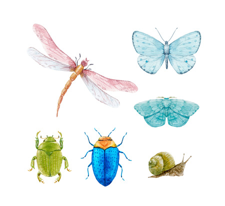 Akwarela zestaw owadów Zdjęcie Seryjne