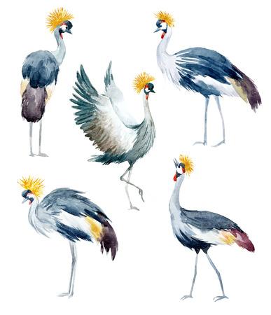 Watercolor african cranes